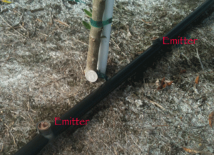 drip_irrigation_williams