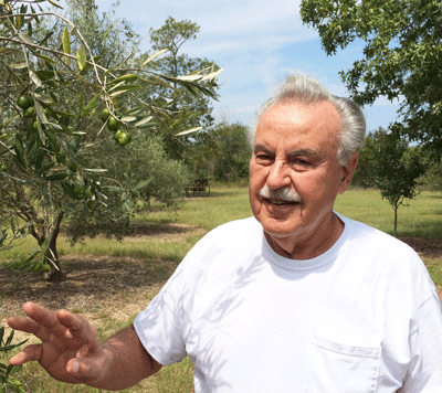 Godfather of Florida Olives